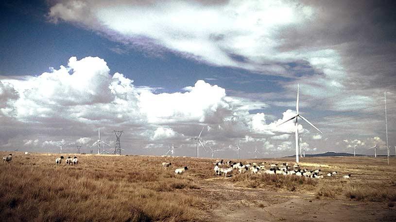 dorper-wind-farm-2
